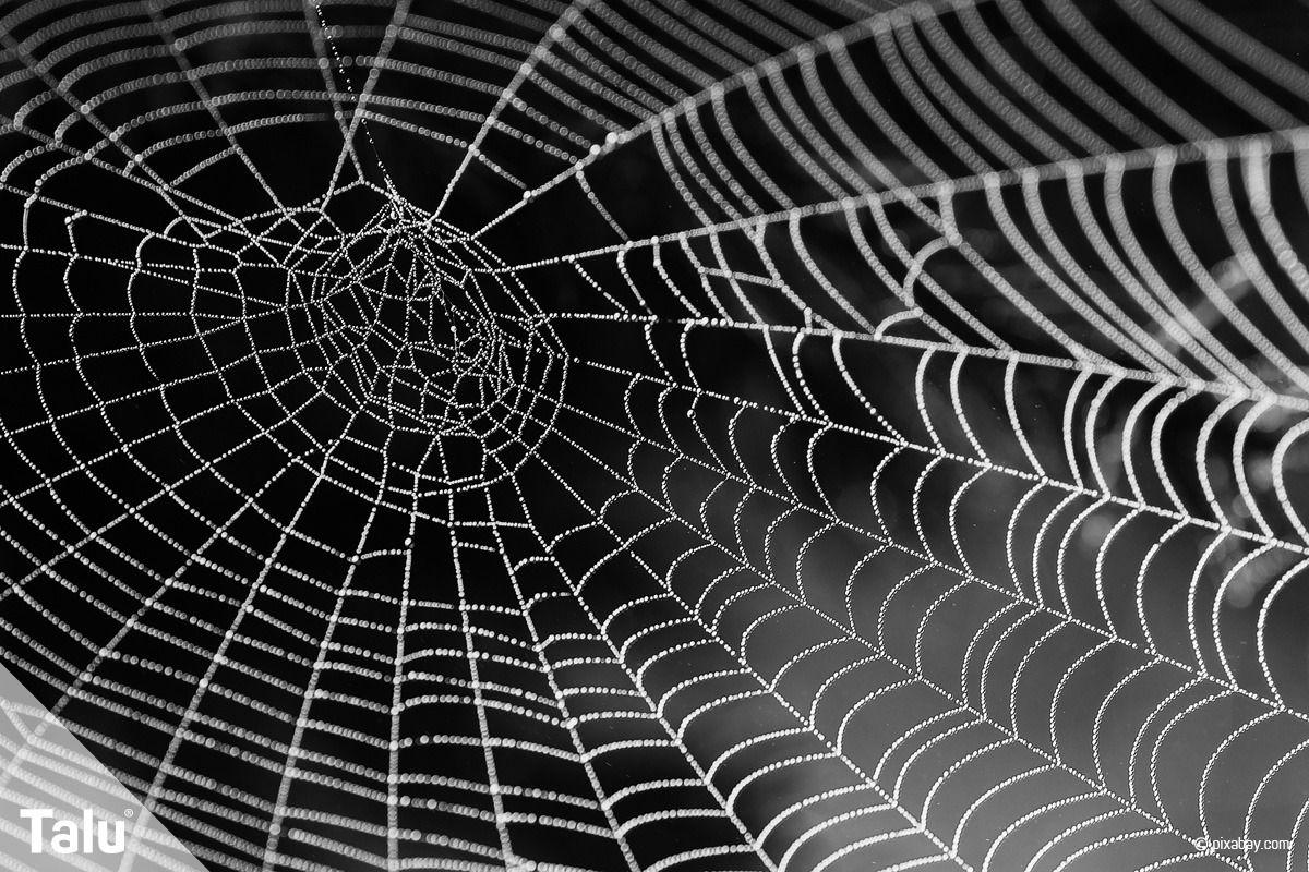 Spinnennetz basteln - 6 Ideen aus verschiedenen Materialien #spinnennetzbasteln