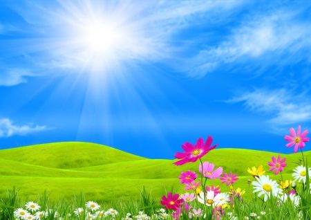 Spring Meadow Green Flowers Spring Meadow Field Sky Sunshine Grass Spring Background Images Blue Sky Images Sunshine Wallpaper