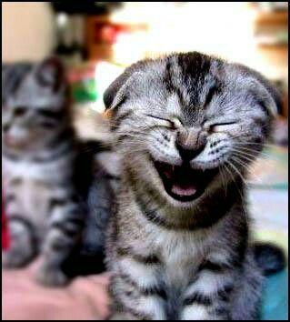 Pin De Rzcs Dniz Jsue En Nini Memes Divertidos Sobre Perros Gatitos Divertidos Gatos