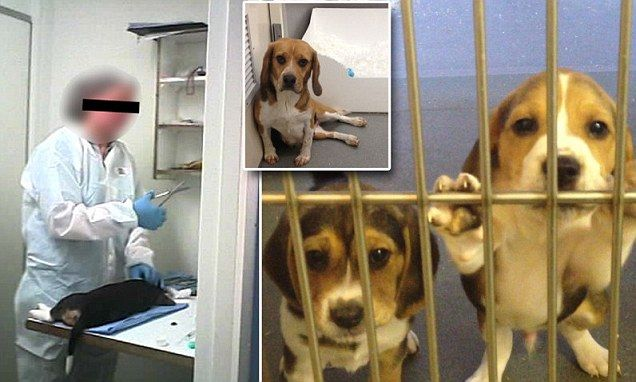 Horrific Video Shows Distress Of Puppies And Kittens Waiting To Be