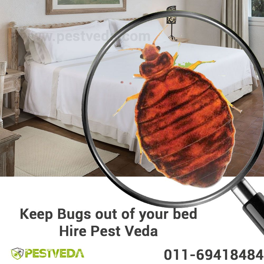 Bed bug causes skin irritation Call PestVeda to