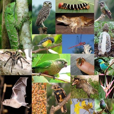 22 De Maio Imagem Dia Internacional Da Biodiversidade 1 Zoologia Biodiversidade Biomas