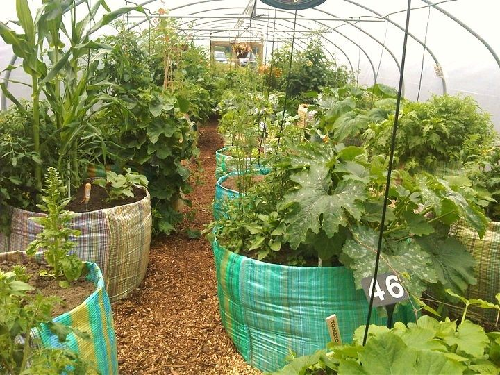 Polytunnel Raised Beds Picture courtesy of Enterprise