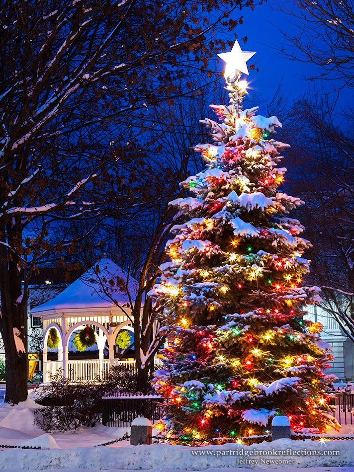 Outdoor Christmas Tree With Lights.Imagine Having This Big And Beautiful Christmas Tree In Your Yard