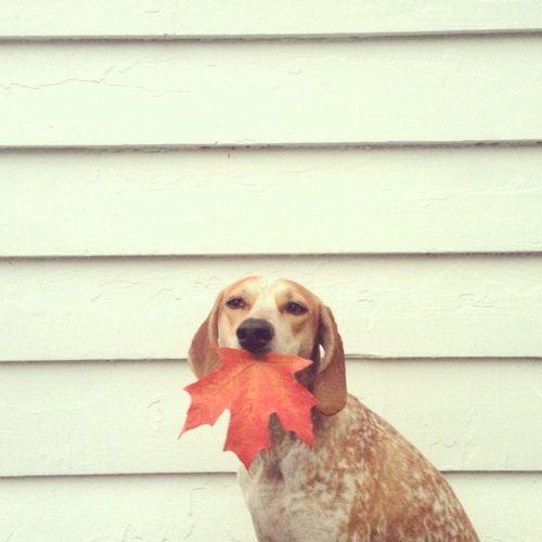 Pin By Roberta De Almeida On Pets Coonhound Super Cute Animals Dog Love