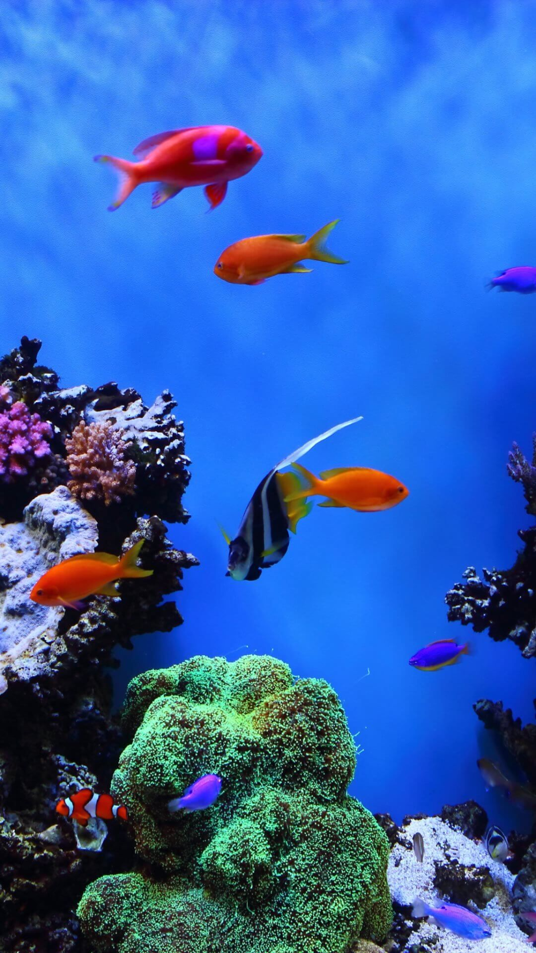 Animal wallpaper aquarium 5, iPhone Wallpaper, iphone 4