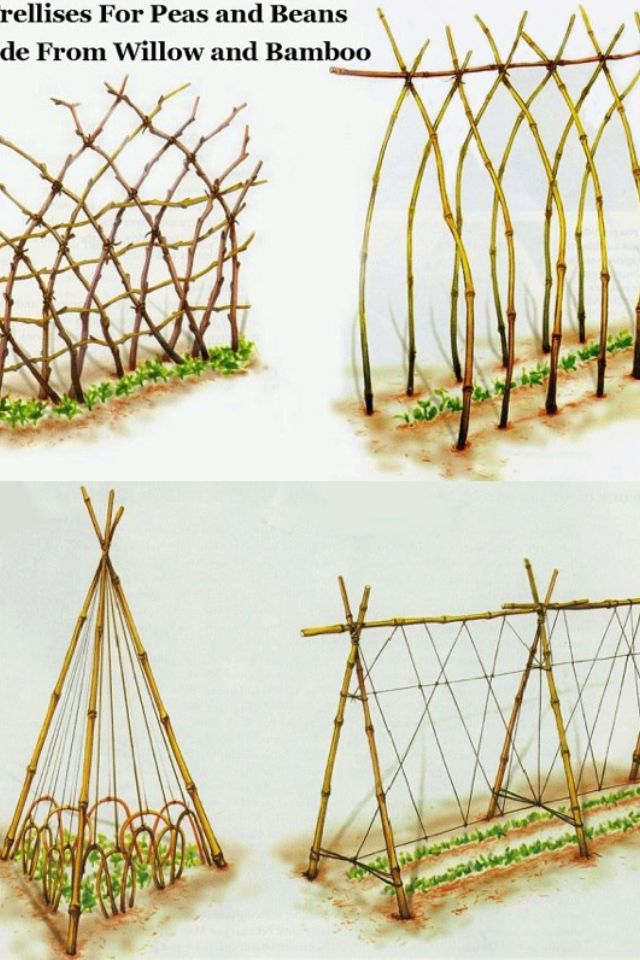 Use Green Bamboo Stakes For The Material With Images Garden