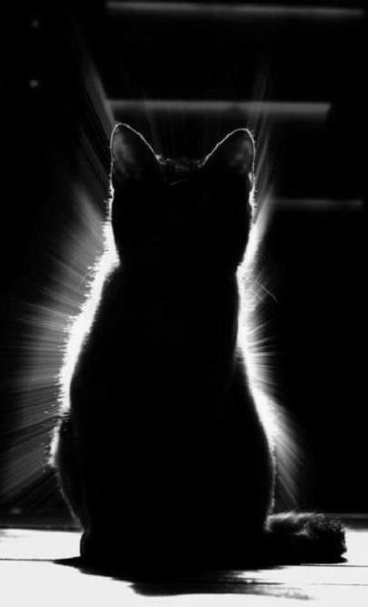 Kittyclipse!!