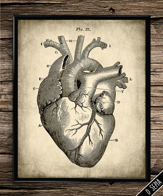 Vintage heart anatomy human body anatomy by UniquelyGiftedArt ...