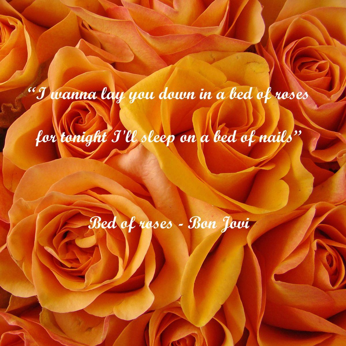 Bed Of Roses Bon Jovi Bed Of Roses Lyrics Roses Lyrics Bon Jovi