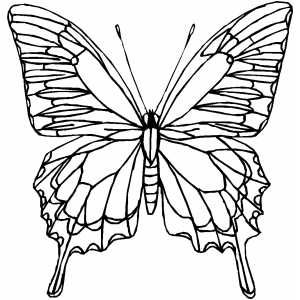 Butterfly Butterfly Coloring Page Coloring Pages Butterfly Art