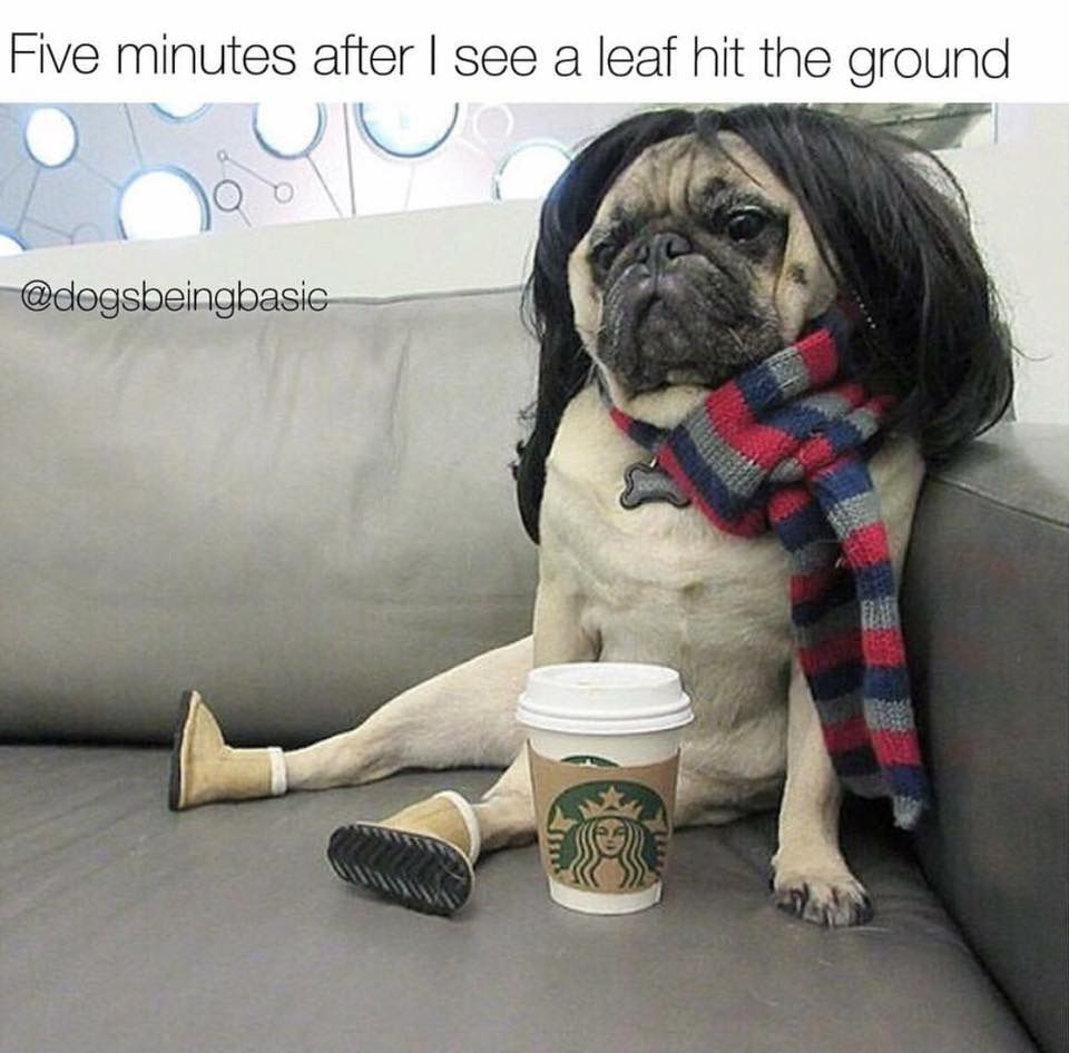 It's Uggs!! Funny dog memes, Pugs, Funny animals
