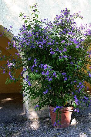 pin von eva schumann auf balkongarten terrassengarten k belpflanzen pflanzen und diy garten. Black Bedroom Furniture Sets. Home Design Ideas