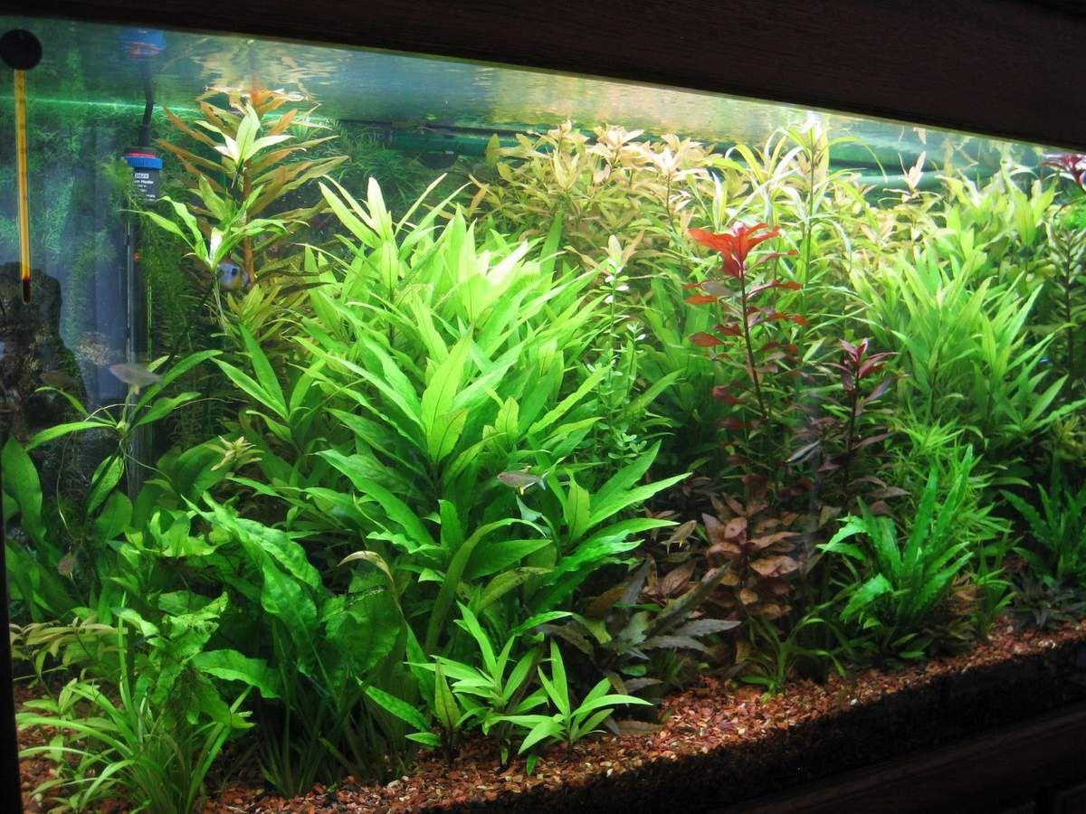 vous r vez d 39 un aquarium plant mais ne savez comment. Black Bedroom Furniture Sets. Home Design Ideas