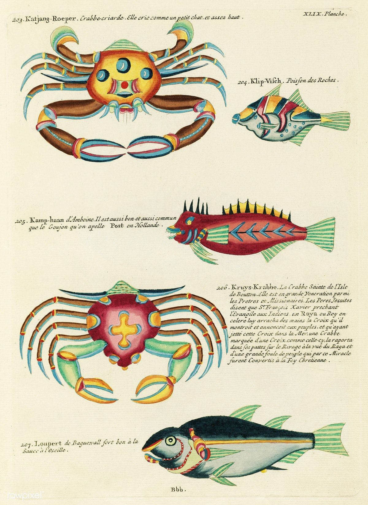 Colourful And Surreal Illustrations Of Fishes And Crabs Found In Moluccas Indonesia And The East In S By Louis Renard   From Histoire