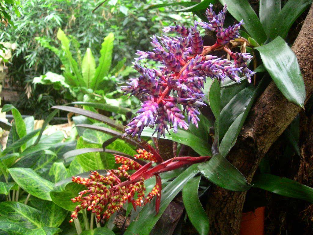 Tropical+Rainforest+Plants | tropical rainforest plants and ...