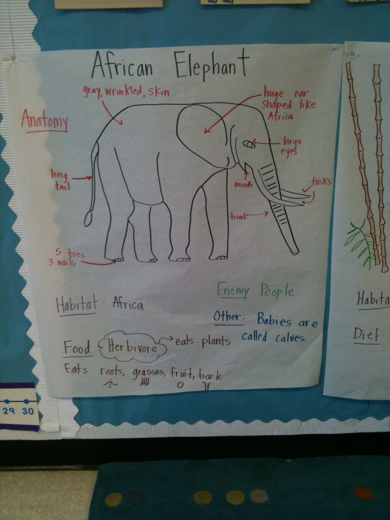 animal unit elephant pictorial input chart my board rh pinterest com Elephant Seal Anatomy Elephant Seal Anatomy