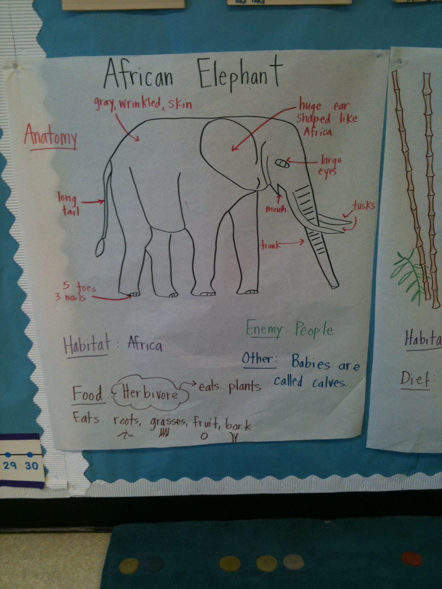 Animal Unit: Elephant Pictorial Input Chart | My board ...