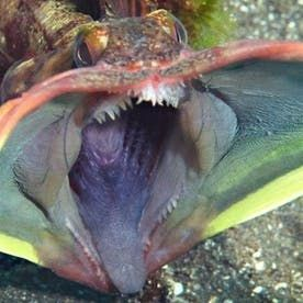 Top 10 Weirdest Deep Sea Creatures | Owlcation