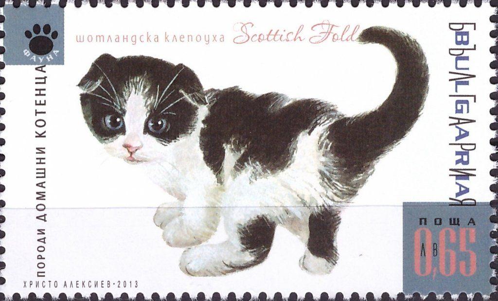 Stamp Scottish Fold Felis Silvestris Catus Bulgaria Cats Mi Bg 5119 Cat Stamp