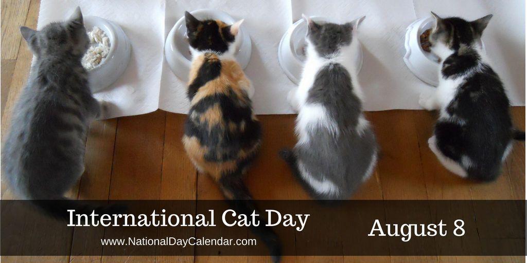 Pin By Sarah Eldakak On International Cat Day International Cat Day Cat Day World Cat Day