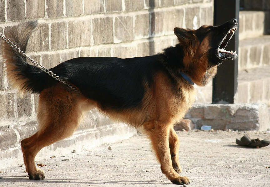 How Effective Are Guard Dogs Really For Home Security Best Guard