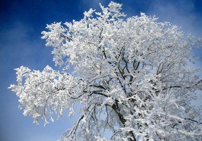 Plantas para zonas frías y de frío extremo