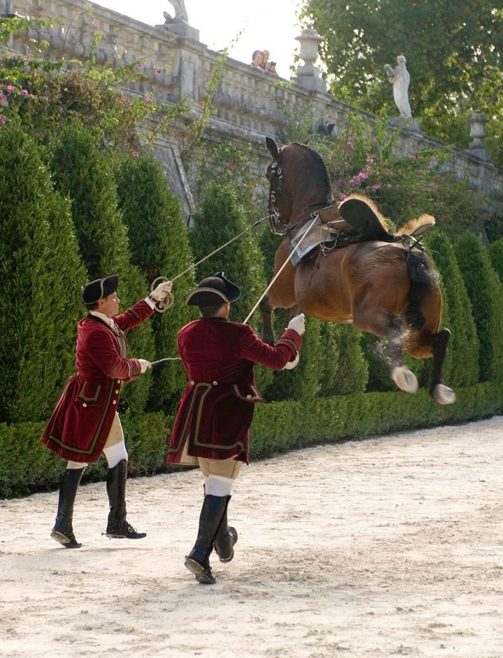 Arte Equestre Portugués High Level Dressage Aire Above The Ground