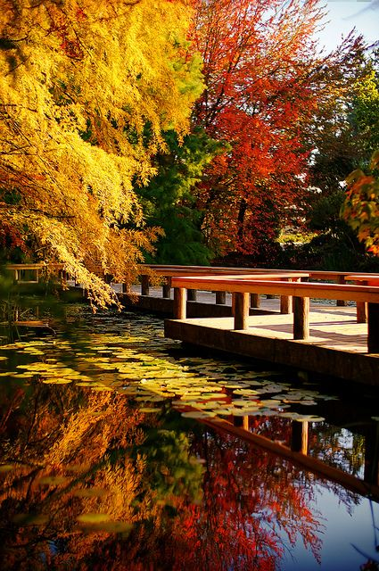 outdoormagic: Vandusen Botanical Garden in Autumn by TOTORORO.RORO on Flickr. Vancouver, Canada