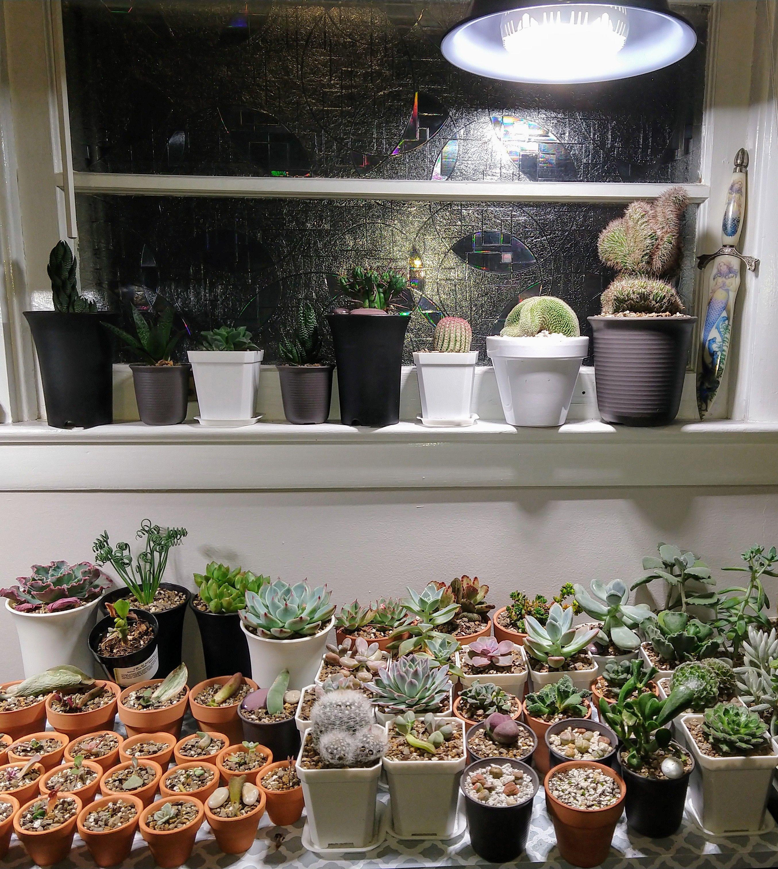SANSI LED Security Lights, LED Bulbs, Grow Lights Grow