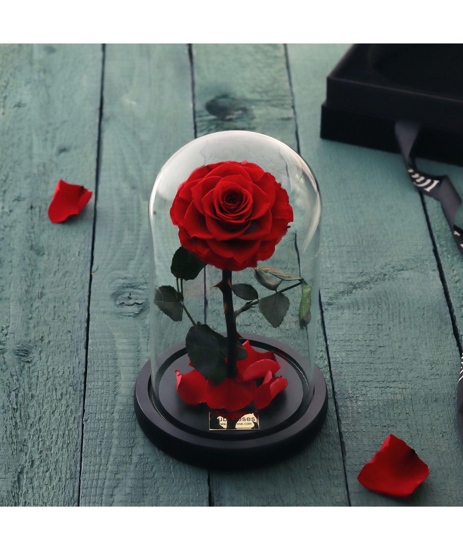 وردة ايلوبا روز احمر داخل فازة زجاجية All Things