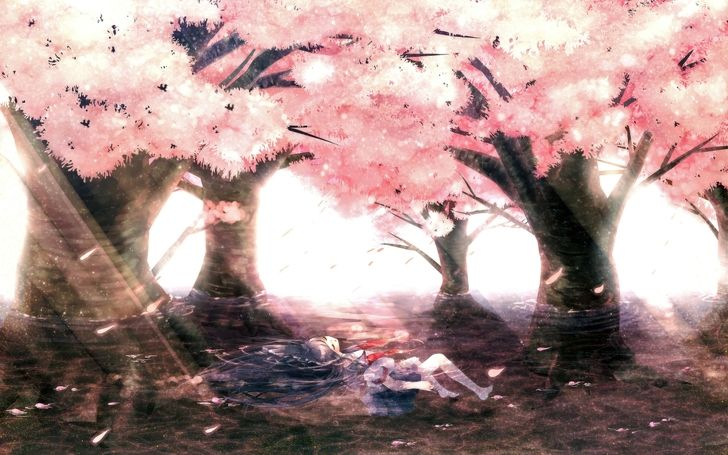 Cherry94 S Profile Myanimelist Net Anime Cherry Blossom Cherry Blossom Wallpaper Cherry Blossom Painting