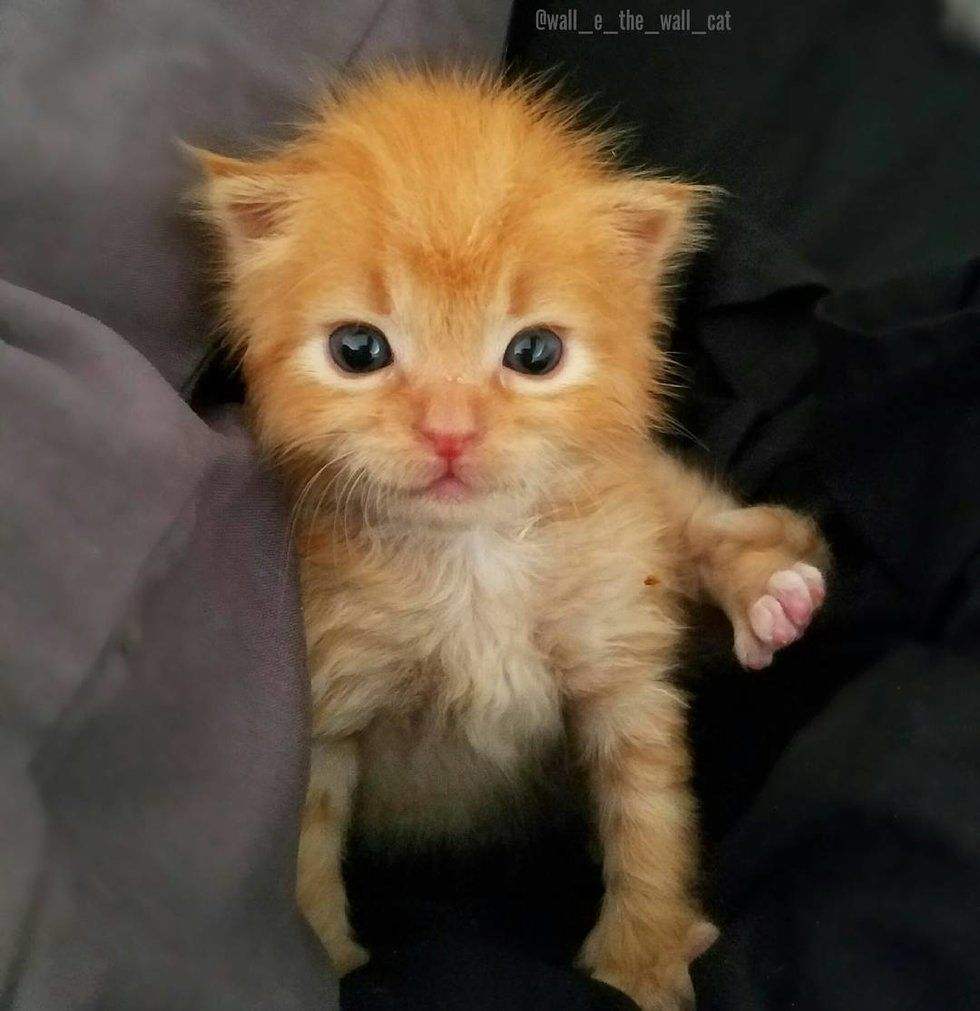 Kitten Found Crying Inside A Wall Gets A New Mom To Love Love Meow Tierbabys Susse Tiere Katzenbabys