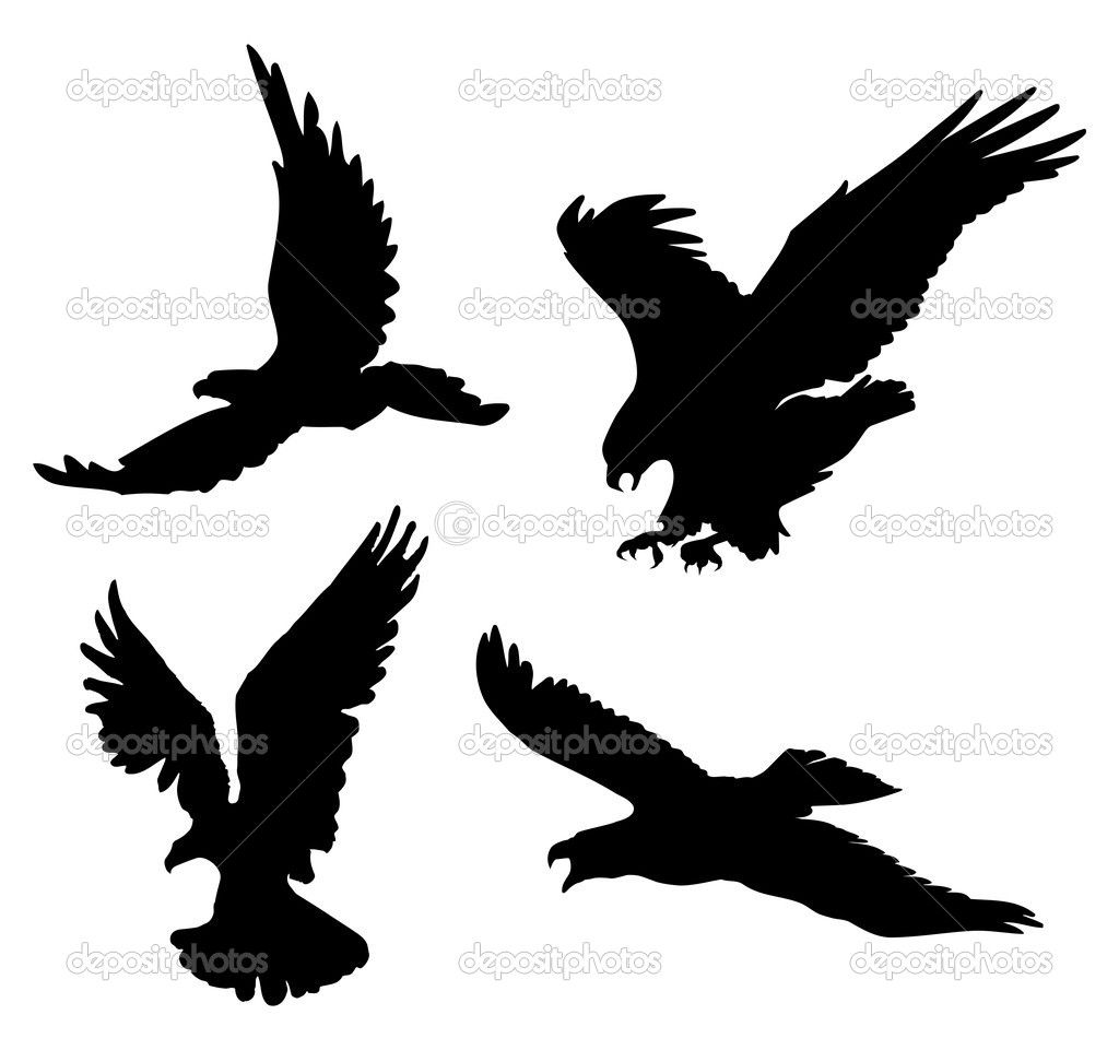 Flying Eagle Silhouettes Stock Vector Day908 Tiny Tats Bald Diagram Golden Related Keywords Suggestions