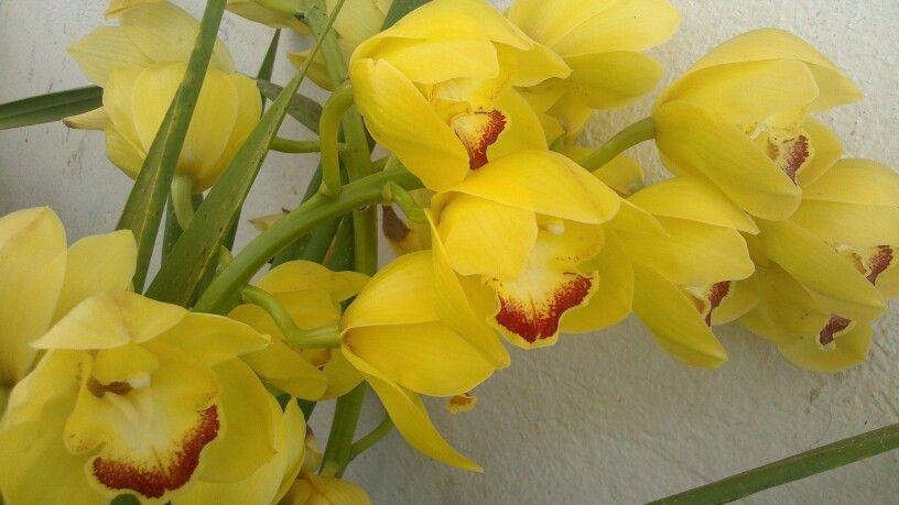 Orquideas de mi inernadero en la mitad del mundo