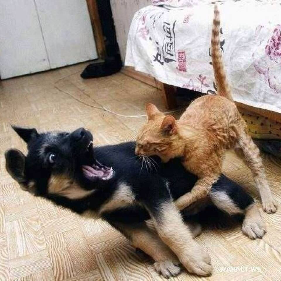 Puppy humor. FunnyFaces Funny cat pictures, Funny cats