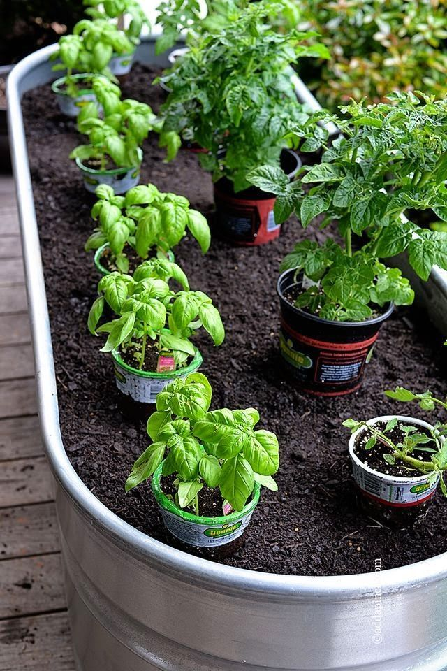 12 Tips for Frugal Gardeners Container gardening