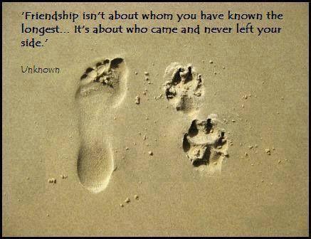 Companion Pet Quotes. QuotesGram By @quotesgram