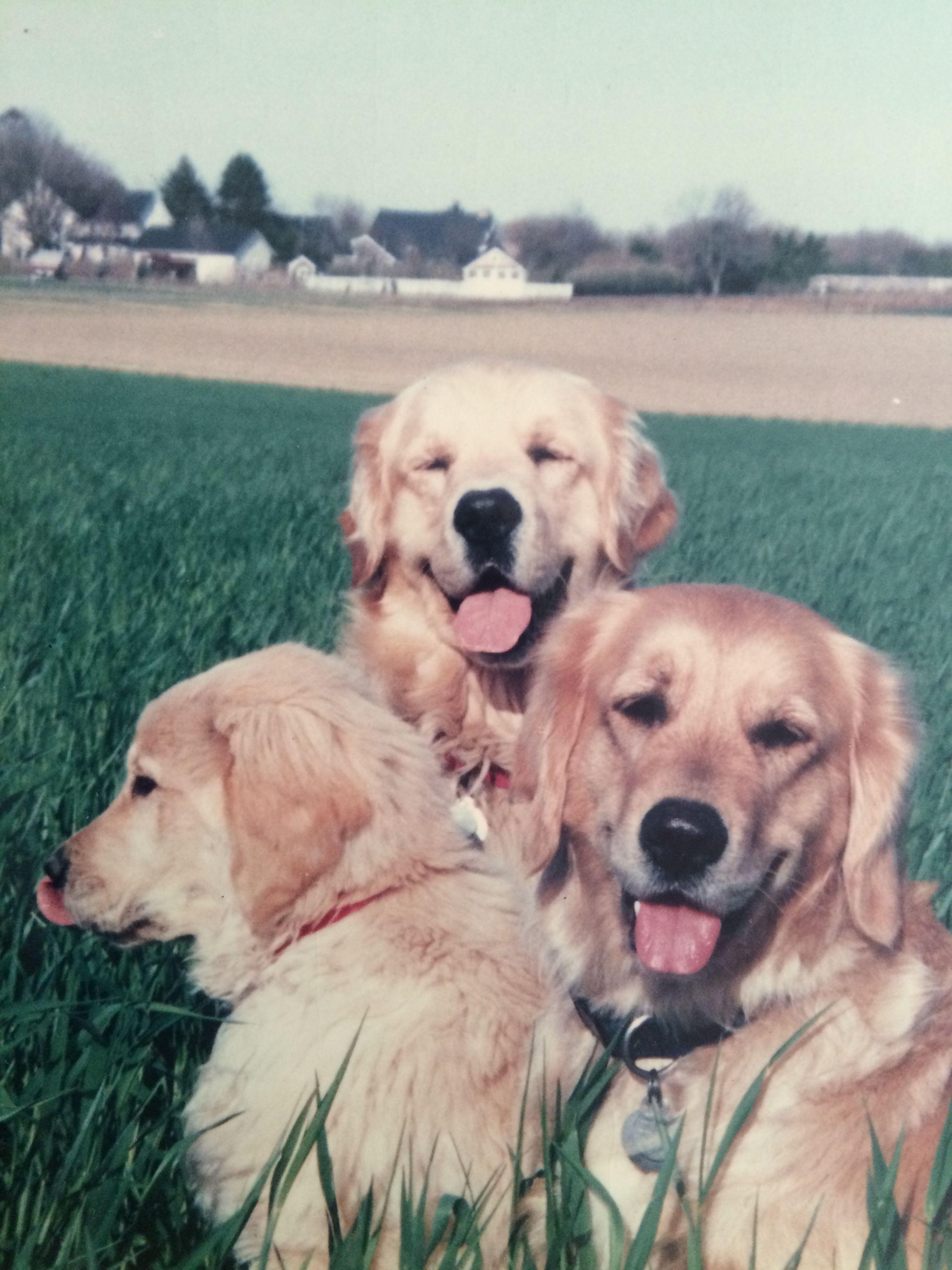 Betsy Tucker And Dexter Dogsofmecox Petsofmecox Doglover