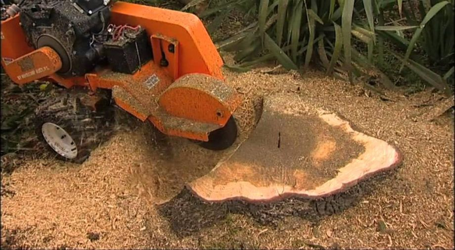 tree stump grinding service on Factors To Consider When Picking A Stump Grinding Machine My Decorative Stump Removal Tree Care Tree Stump Grinder