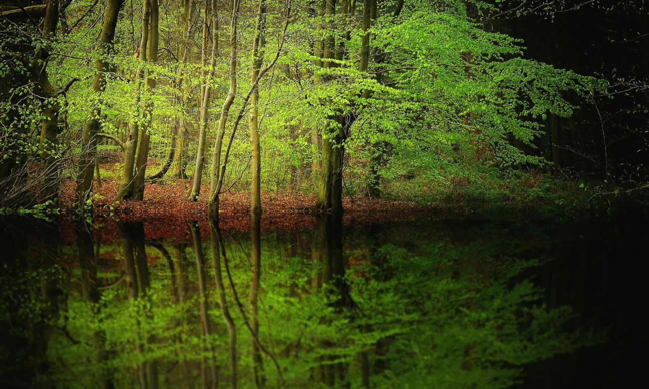 Download Nature Forest Trees Water Reflection Hd Wallpaper High Quality Hd Wallpaper In 2k 4k 5k 8k 10k Resolution For Water Reflections Hd Wallpaper Wallpaper