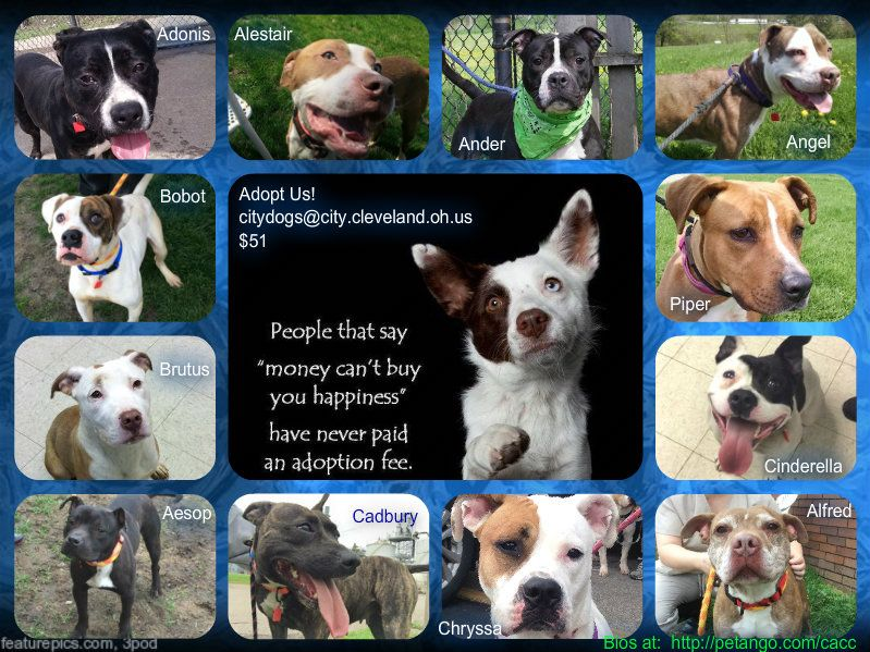Available Dogs as of 5/10/15