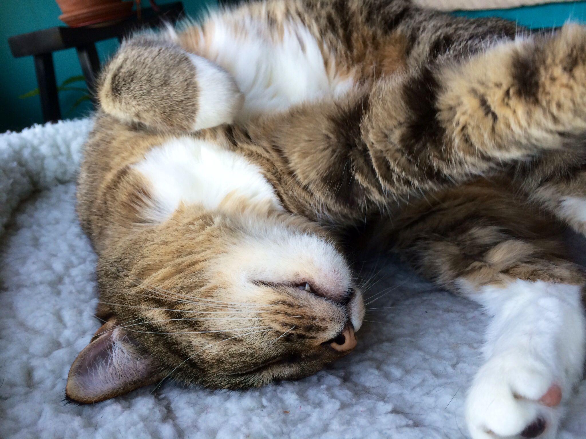 Curled feet cats animals feet