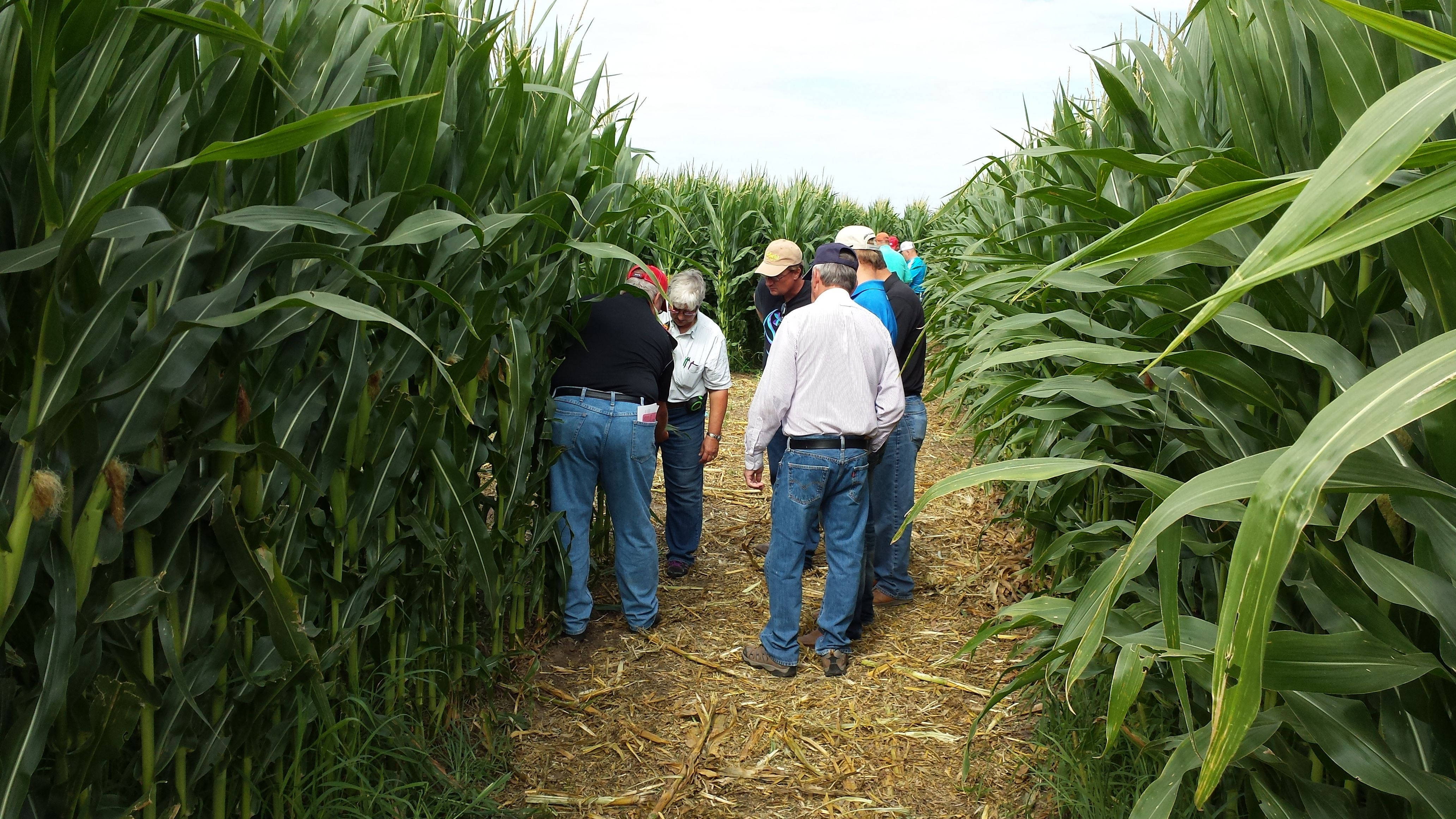Crop Insurance in America cropinsurance (With images