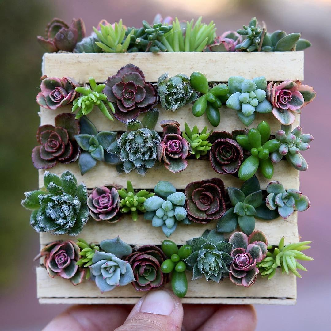 Miniature cuteness!!! DIY Mini Pallet with succulents just