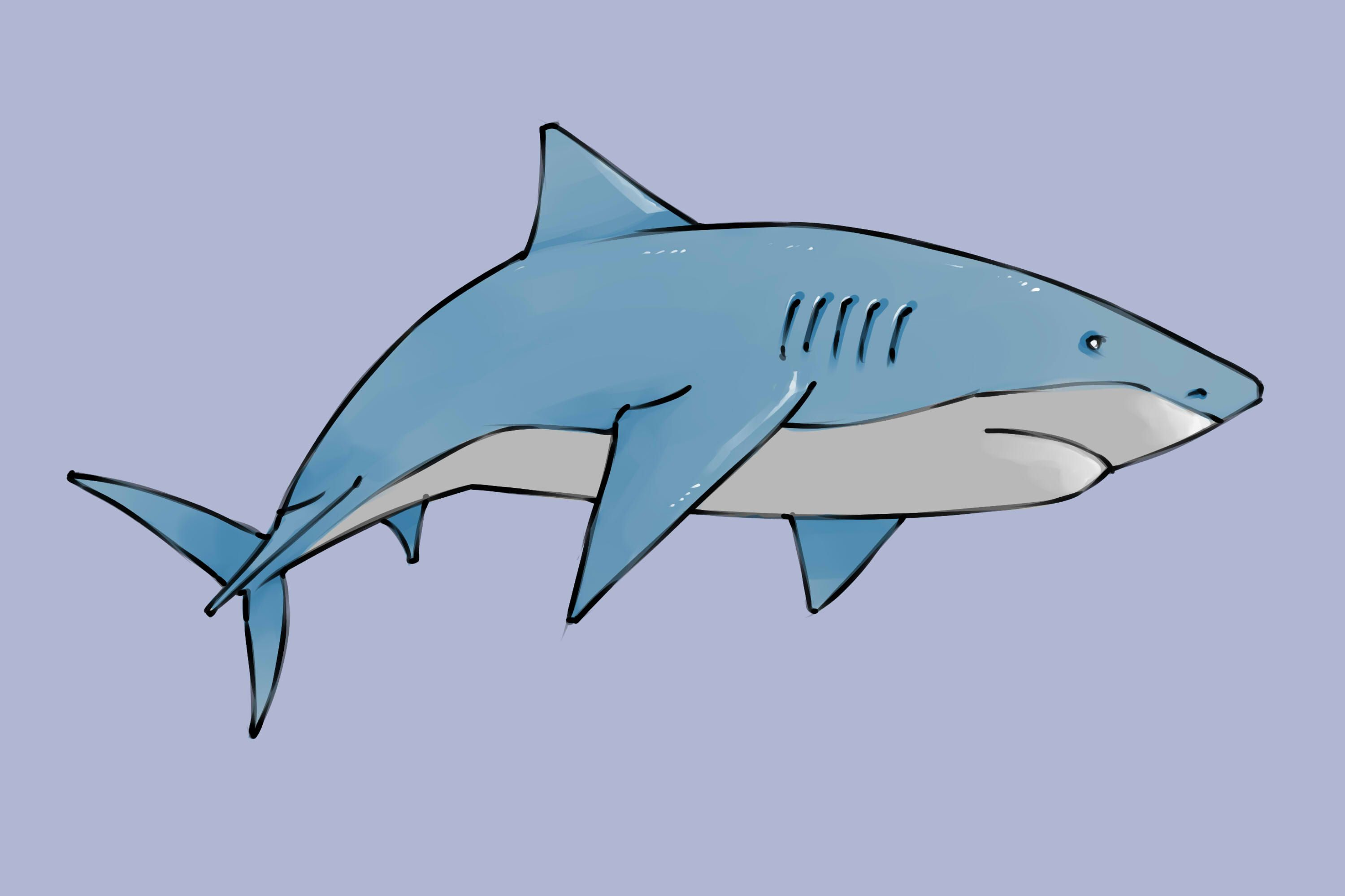 How to draw a shark via wikihow com