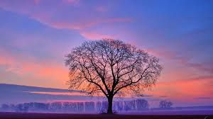 A Simple Tree Night Landscape Photography Landscape Photography Trees Landscape Photography