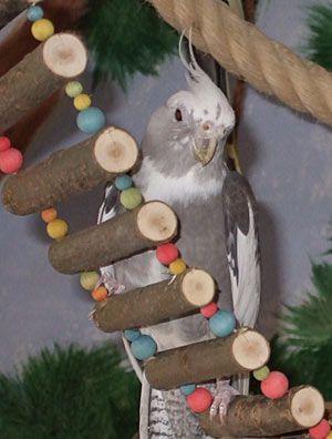 Wellensittich Spielzeug Kokosnuss