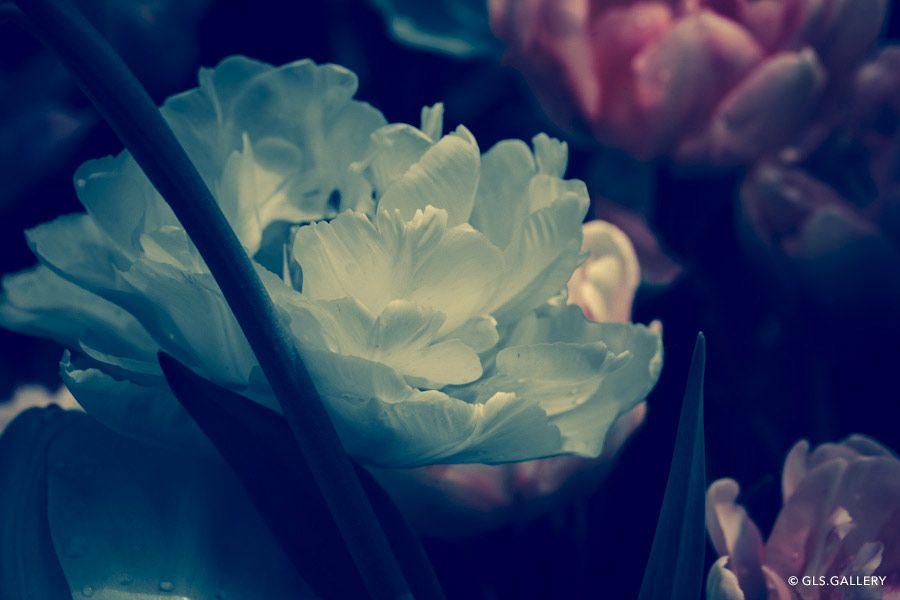 http://www.gls.gallery/categoria-prodotto/open-edition/flowers-open/