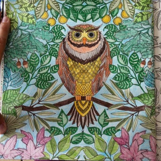 Enchanted Owl Colour Secret Garden Coloring Book Secret Garden Coloring Book Finished Johanna Basford Coloring Book